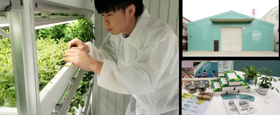 屋内農園型障がい者雇用支援「IBUKI」、16拠点目の施設を大阪府にて8月開設